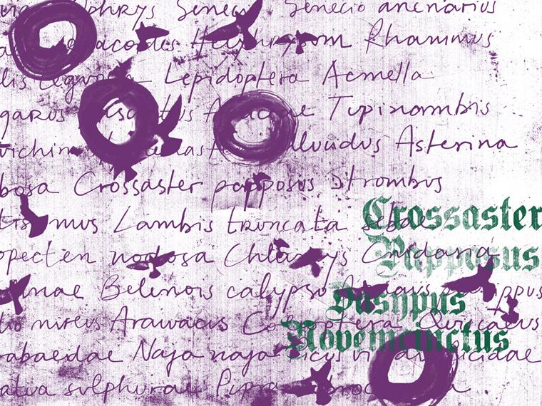 http://www.laet.com.br/site/files/gimgs/39_13-circulos-textos-passaros.jpg