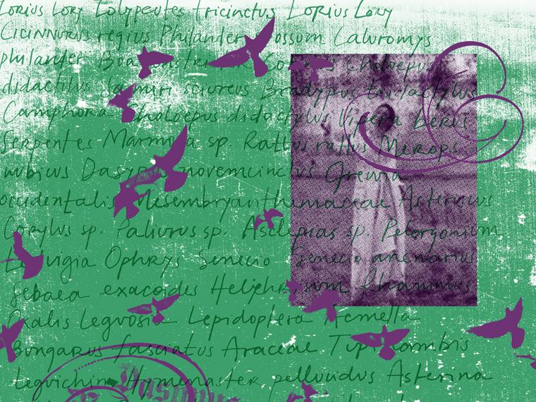 http://www.laet.com.br/site/files/gimgs/39_9-textos-passaros-goticos.jpg