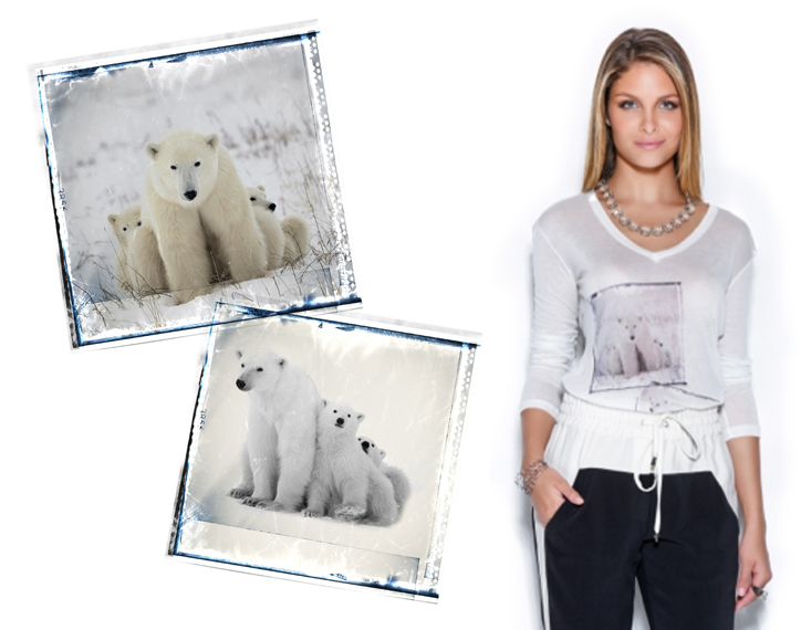 http://www.laet.com.br/site/files/gimgs/39_bearsfinalfoto.jpg
