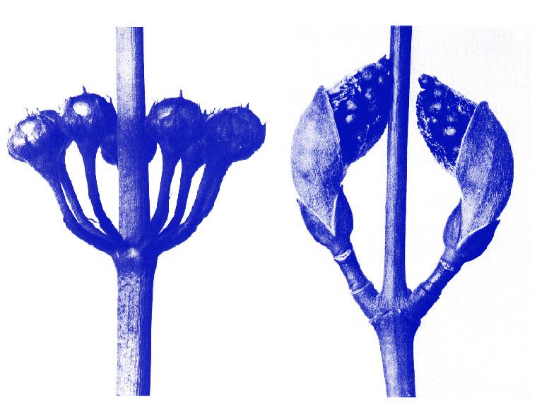 http://www.laet.com.br/site/files/gimgs/48_flores-azul.jpg