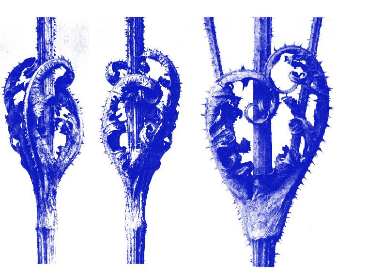 http://www.laet.com.br/site/files/gimgs/48_flores-azul1.jpg